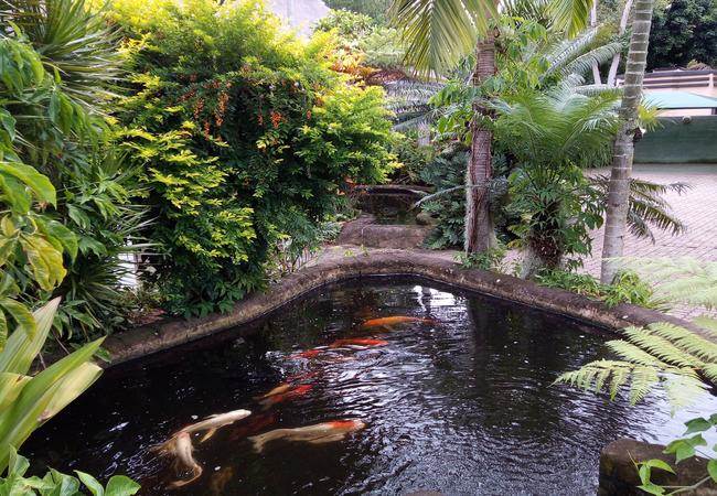 Koi Fish Ponds