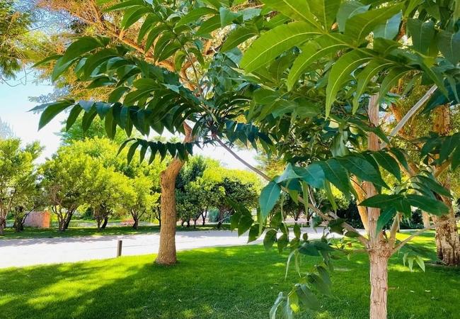 African Vineyard Guesthouse
