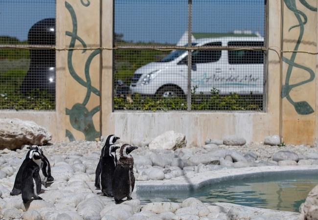 African Penguin Sanctuary
