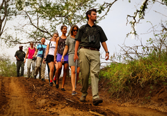 A guided game walk at AmaKhosi Safari Lodge
