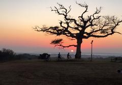 Amorello Africa
