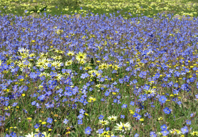Spring flowers in Darling 1 hour drive