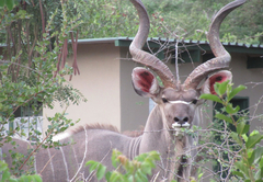 Baluleni Safari Lodge