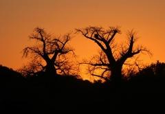Baobab Hill Bush House