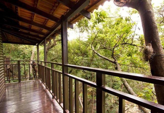 Tree Top Cabin