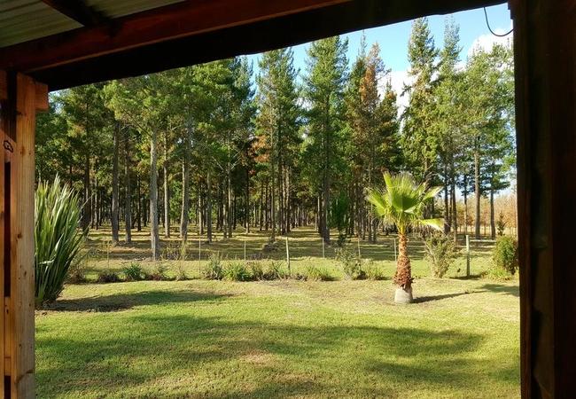 Porcupine Forest Lodge