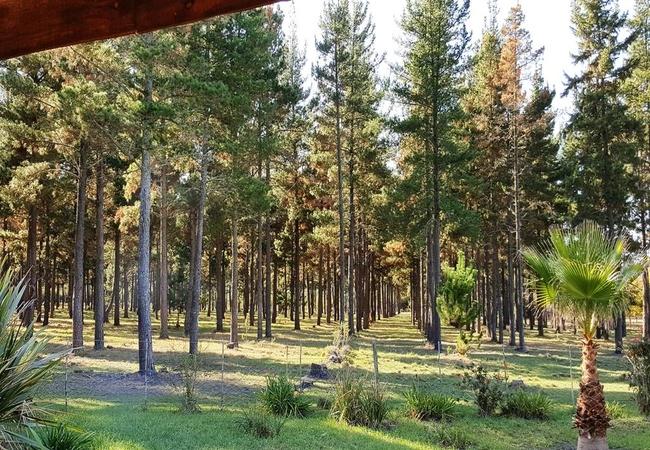 Honey Badger Forest Cottage