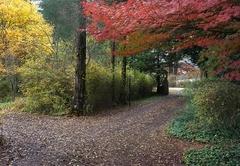 Birches Cottages