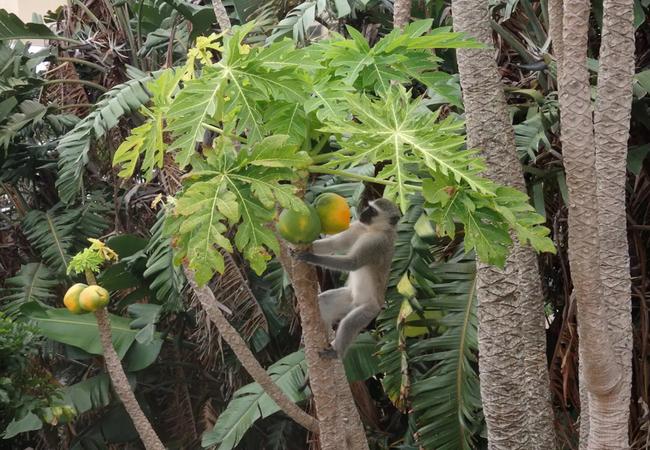 House - Single beds