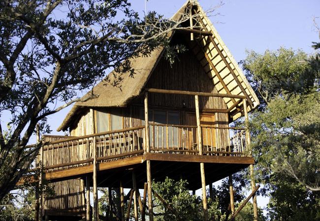 Family Tree House