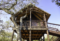 Couples Tree House