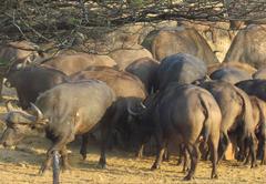 Buffalo Hill Safari Lodge
