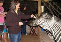 Zebras visiting Bush lodge