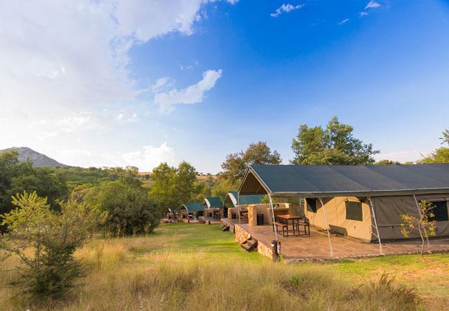 Bushwillow Tented Camp In Muldersdrift Gauteng