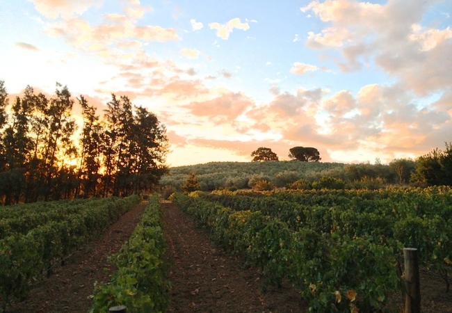 Calais Wine Estate