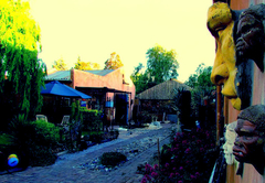 Calvinia Magic Garden
