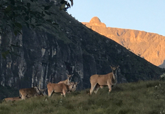 Eland above driveway to cottage at sunrise