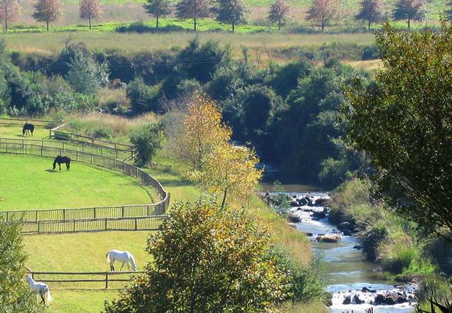 Horses near Caversham Mill