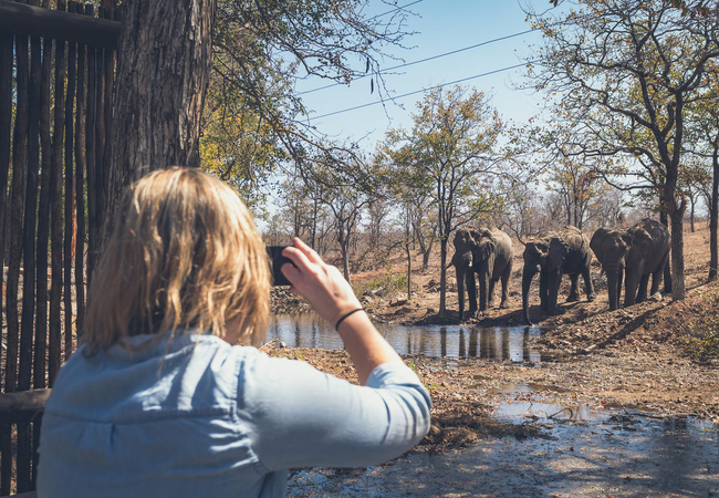 Observing Elephants from Camp