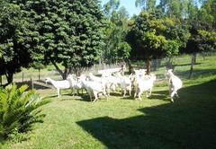 Chane Cheese Farm & Lodge