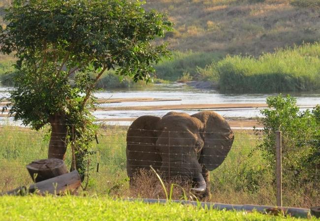 Wildlife at Croc Bridge Safari Lodge