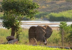 Wildlife at Croc Bridge Safari Lodge