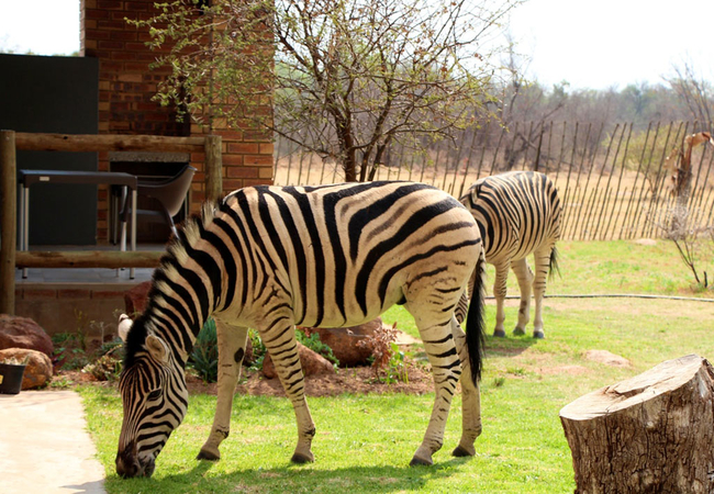 De Kleine Serengeti