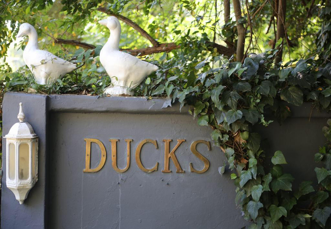 Ducks Country House