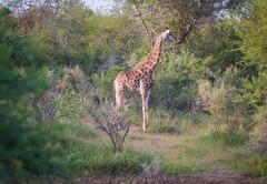Eden Safari Country House