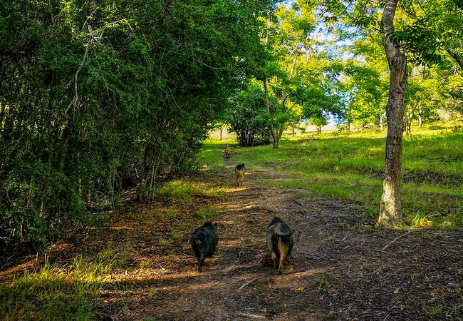 Pet Friendly Walk