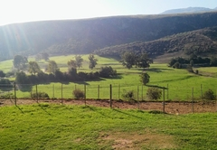 Fleckvieh Guest Farm