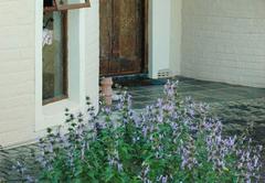 Taaibos front door