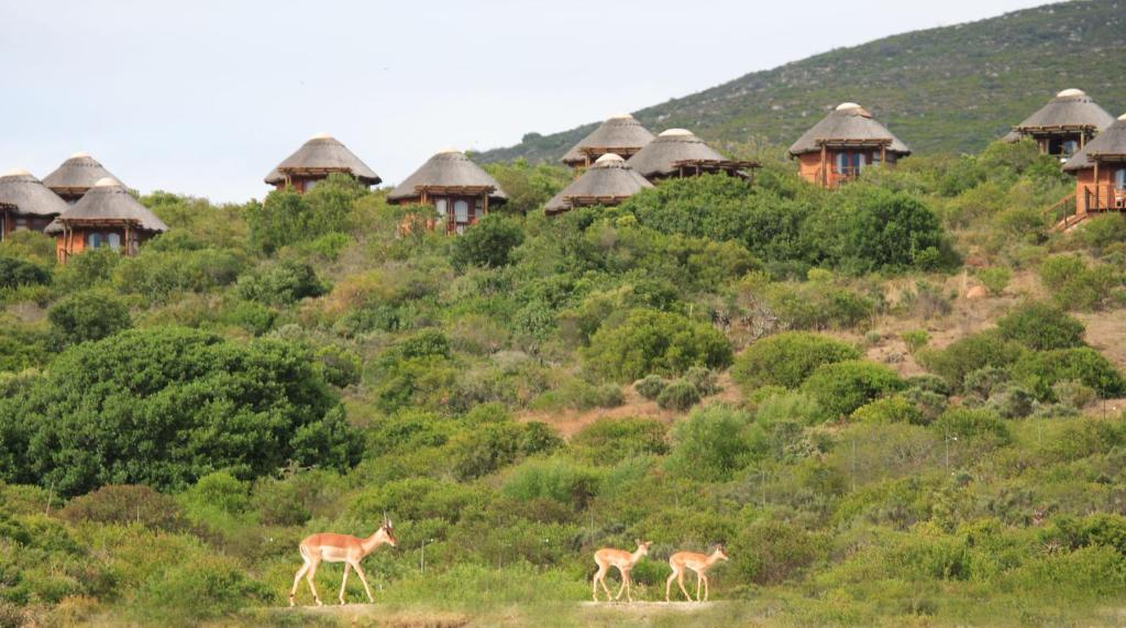 Current Rates For Garden Route Game Lodge In Albertinia