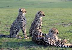 Wildlife experiences