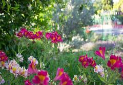 Gariep Gardens