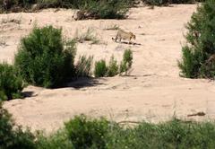 Gecko Kruger Camp Experience