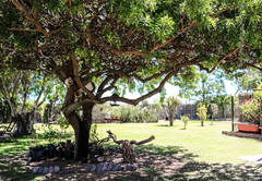 Goblins Creek Garden
