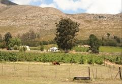 Grootnek Guest Farm