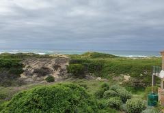 Gull's Stilbaai