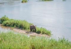 Hippo Hills