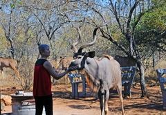 Imbube Safari Lodge