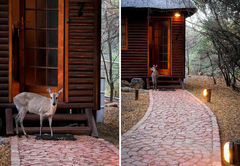 Family Wooden Cabin