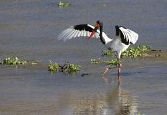 Bird Life galore