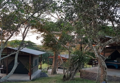 Safari Tents