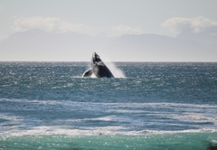 View the whales
