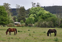 Korongo Valley Guest Farm