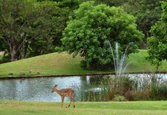 Kruger Park Lodge 252