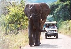 Safari drives on request