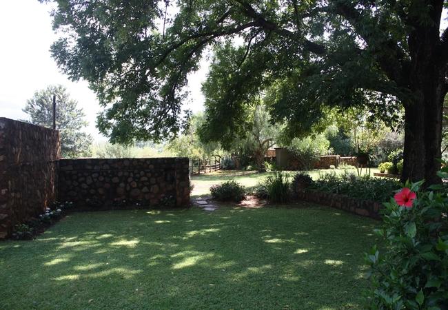 Garden Pecan Tree