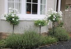 Lavender Lane Queenstown